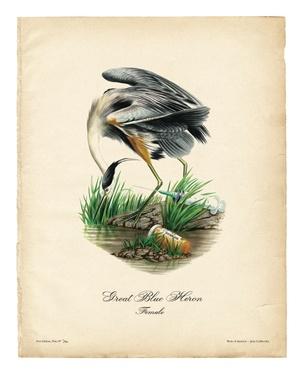 Birds of America (Great Blue Heron)